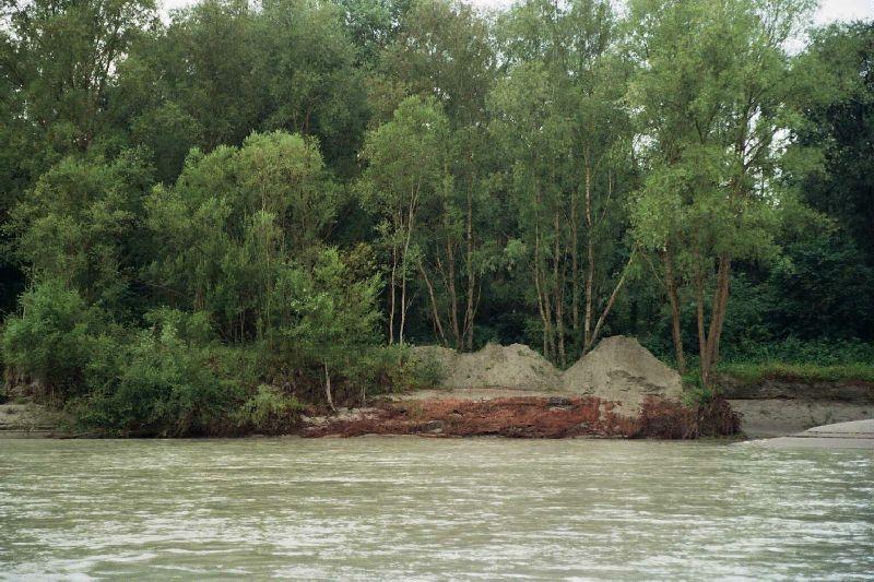 Auwald vom Wasser her